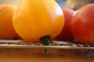 tomate-300x200 Nem todos os legumes e frutas devem ir para o frigorifico.